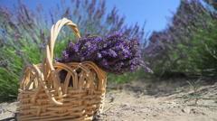 Basket of Lavender Stock Footage
