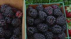 Colorful berries collected in baskets Stock Footage
