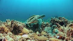 Green Sea turtle on a Coral reef 4K Stock Footage