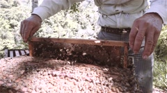 Hispanic apiarist harvesting honey Stock Footage