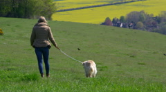 Mature Woman Taking Dog For Walk In Countryside Shot On R3D Stock Footage