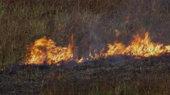 Fire in the dry grass field Stock Footage