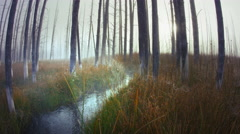 Stream and spider web in morning mist, Yellowstone National Park, Wyoming Stock Footage