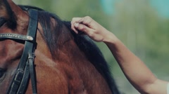 Horse mane. Woman's hand stroking the horse. Eye horse Stock Footage