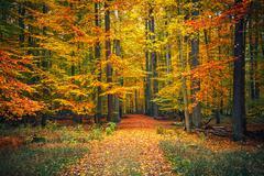 Path in autumn park Stock Photos