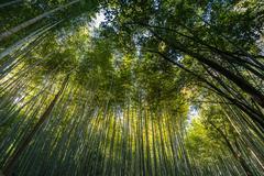 Bamboo grove, bamboo forest at Arashiyama, Kyoto, Japan Stock Photos