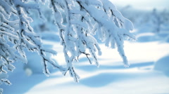 Branch and lots of Snow Stock Footage