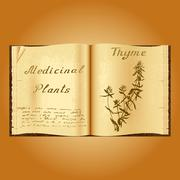 Thyme. Botanical illustration. Medical plants. Book herbalist. Old open book Piirros