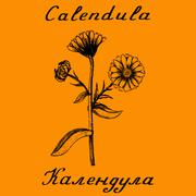Calendula hand drawn sketch botanical Stock Illustration