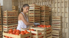 Young girl arranging in crates  tomatoes at the warehouse of fruits by Cutter. Stock Footage