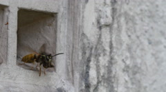 4K wasps nesting in vent Stock Footage