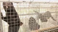 Animal farm with mink Stock Footage