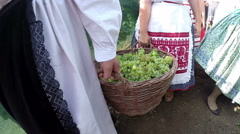 Grape Harvest in the Countryside Stock Footage