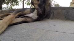Street dog Stock Footage