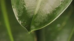 Raindrops on a plant leaf Stock Footage
