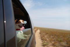 Happy dog in driving car Kuvituskuvat