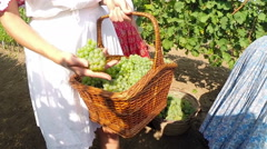 Young Countrywoman Carrying Basket With Grapes in a Vineyard Stock Footage
