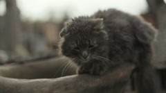 Gray homeless cat sitting on the wooden fence. Sleepy cat sitting on the wooden Stock Footage