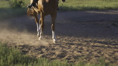 Close-up of the horse's hooves. Running horse makes dust Stock Footage
