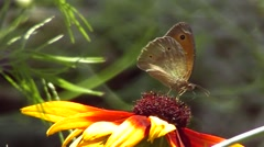 In the summer garden, observation and contemplation of the beautiful. Stock Footage