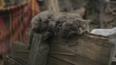 Lonely homeless cat is napping on the wooden fence, colored carpet and rubbish Stock Footage
