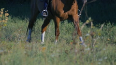 Legs of galloping horse as it approaches in slow motion. Stock Footage