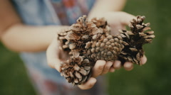 Handful of pine cones in little hands of girl Stock Footage