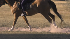 Running horse makes dust Stock Footage