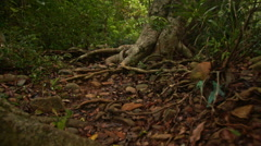 Shady Narrow Path in Thick Tropical Park Stock Footage
