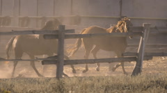 Two horses galloping on a ranch in slow motion Stock Footage