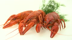 Crawfish. Crayfish. Red boiled crawfishes on a white background Stock Footage