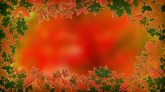 Abstract, Animated Frame of Autumn Maple Leaves. Video 4k Stock Footage