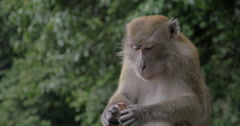 Monkey eating chocolate candy Stock Footage