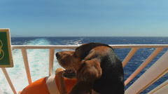 Dog in ship looking at the sea going on summer vacations. Stock Footage