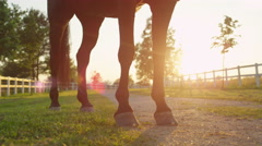 CLOSE UP: Strong stallion standing on footpath and swaying with tail Stock Footage