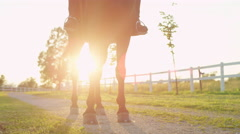 CLOSE UP: Strong stallion standing on footpath on sunny evening at horse center Stock Footage
