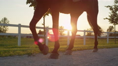 CLOSE UP: Strong gelding walking on footpath along vast meadow field Stock Footage