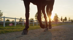 CLOSE UP: Strong gelding walking on footpath along white corral Stock Footage