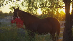 Woman tying horse to the wooden post of ranch Stock Footage
