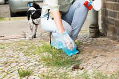 Close-up Of Female Hand Picking Up Dog Feces With Plastic Bag Stock Photos