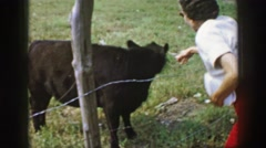 1961: a well-dressed woman attempting to pet a small black calf  Stock Footage