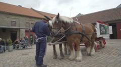 Cart horse - Copenhagen beer factory Stock Footage