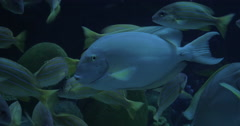 In Bangkok, Thailand at the oceanarium of Siam Ocean World seen many floating Stock Footage