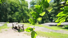 Close up of tree leaves at park with bench in the background Stock Footage