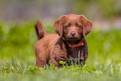 Little dog in the garden Stock Photos