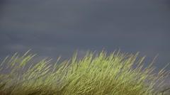 Green fresh vivid grass waving in the breeze under dark sky before storm Stock Footage