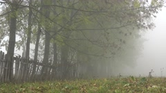 Foggy rustic landscape, wooden fence and trees in mist, mysterious autumn view Stock Footage