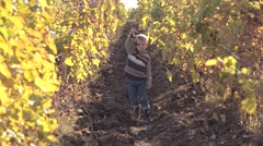 Funny child eating grape in autumn vineyard, warm sunlight of autumn Stock Footage