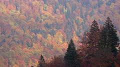 Gorgeous colorful autumn forest, up view, nature painting Stock Footage