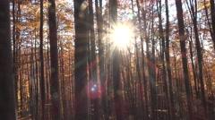 Sun rays shinning in autumn forest Stock Footage
